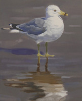 Gull with Reflection